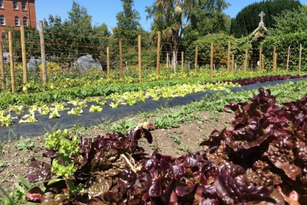 An Tairseach Organic Farm and Ecology Centre Tours