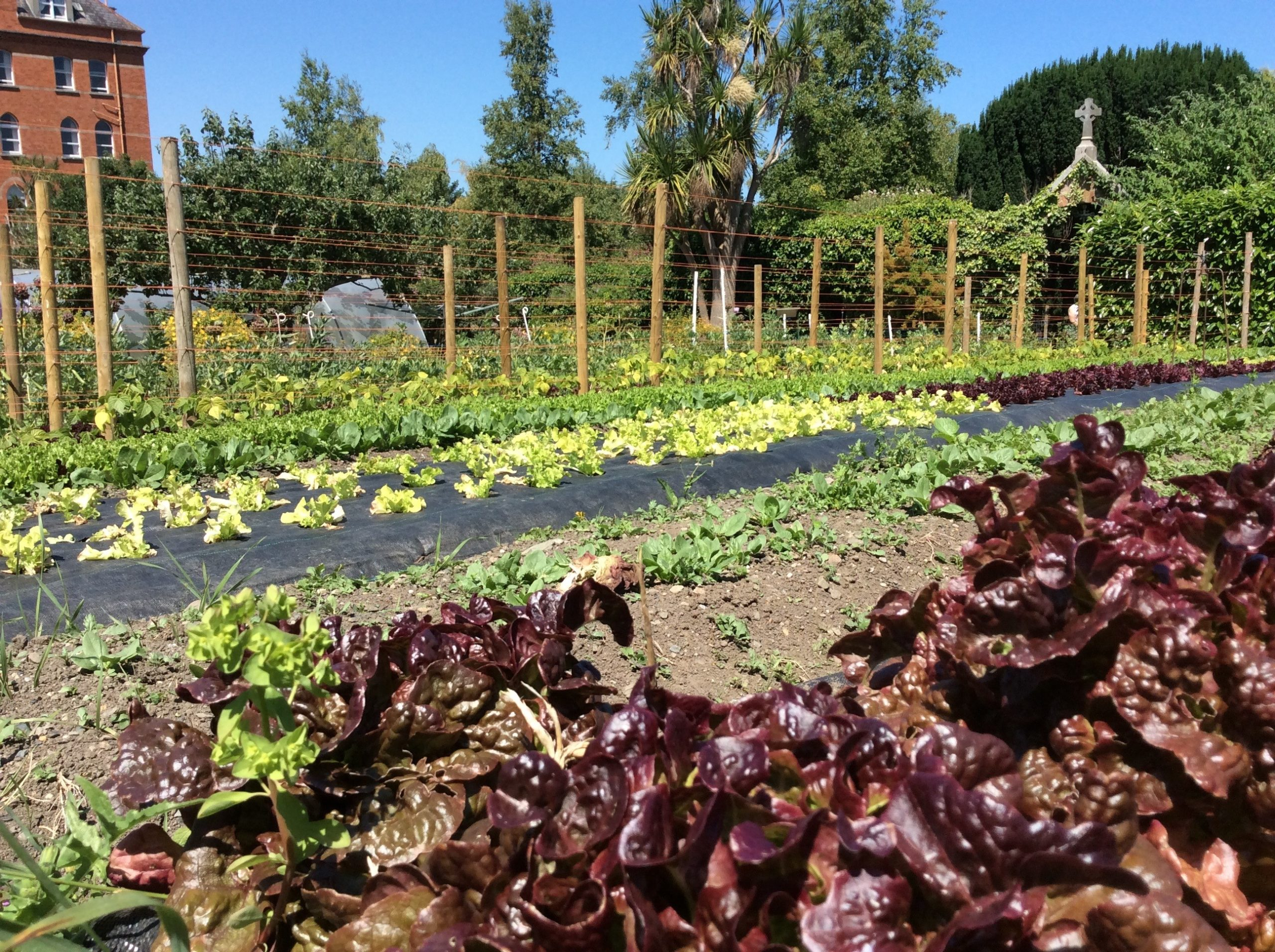 Beautiful vegetables being grown at An Tairseach Organic Farm and Ecology Centre in Wicklow - Wicklow Naturally