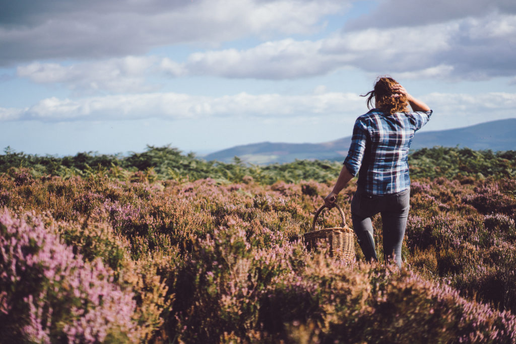 World Environment Day 2020 - foraging in County Wicklow, The Garden of Ireland