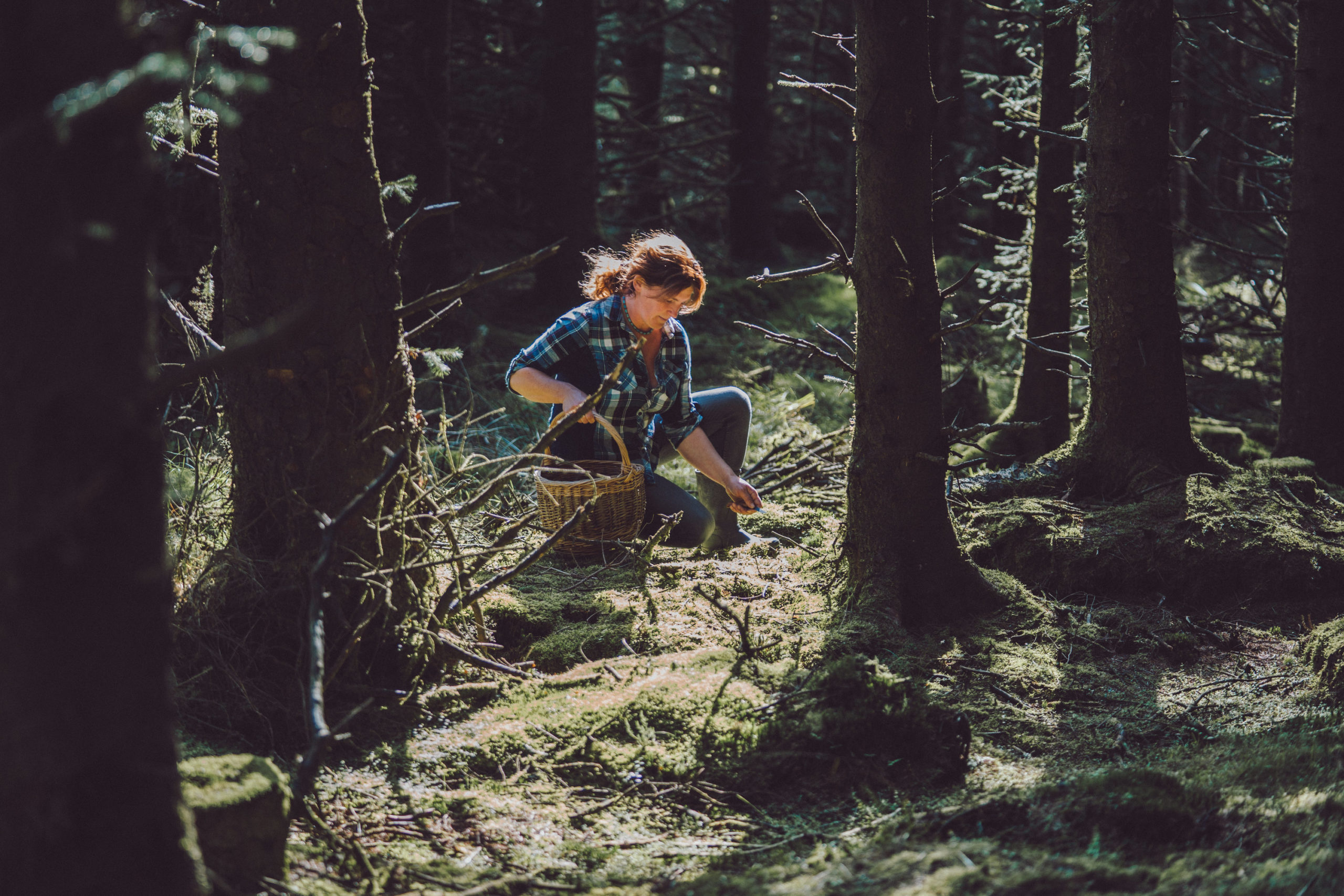 Foraging Tour with Wicklow Wild Foods with forager Geraldine Kavanagh