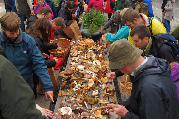 SOLD OUT – Mushroom Foraging with Bill O'Dea from Mushroomstuff