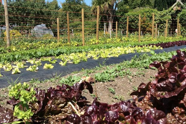 Take in a tour of An Tairseach Organic Farm & cookery demonstration